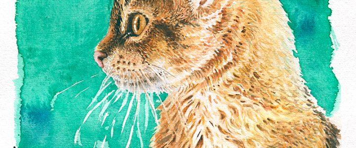 Akvarellimaalaus kissasta