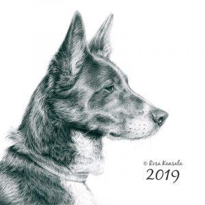Lyijykynäpiirros koirasta, 30 x 30 cm